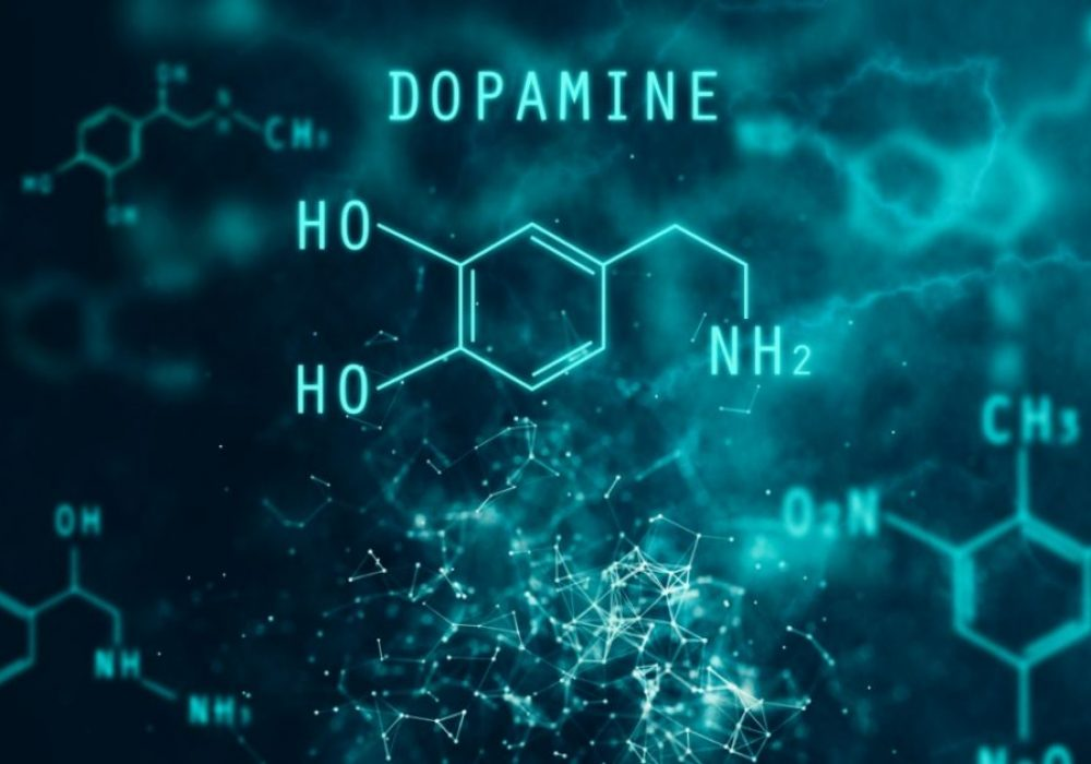Dopamine – what should we value, risks, or motivation? – Report Door